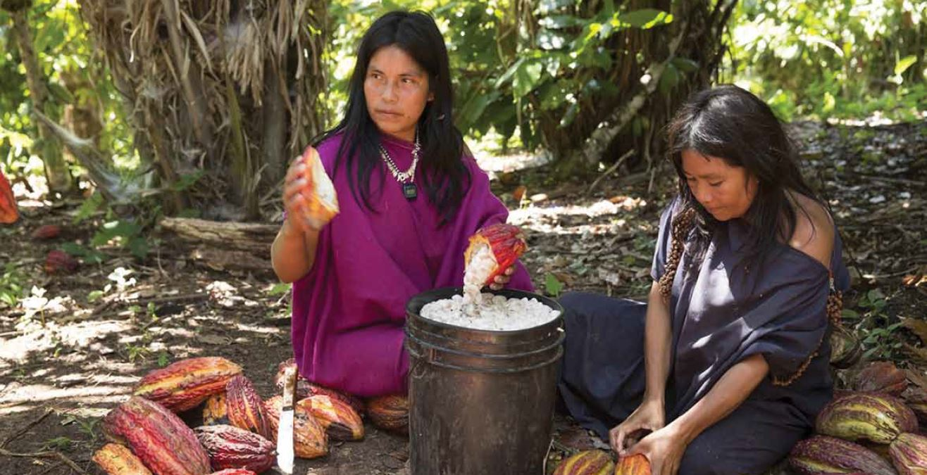 Sustainable cocoa and coffee production, Peru